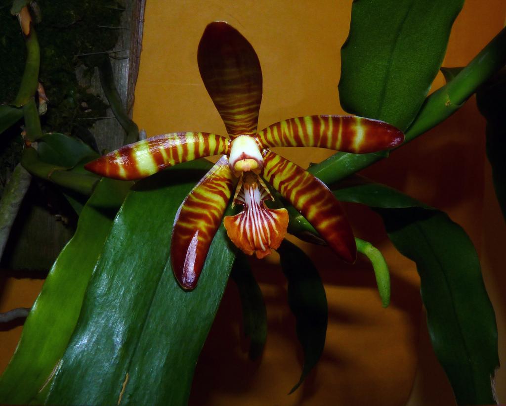 Lan Esmeralda clarkei