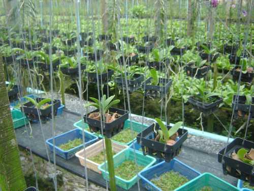Chọn chậu và giá thể trồng lan