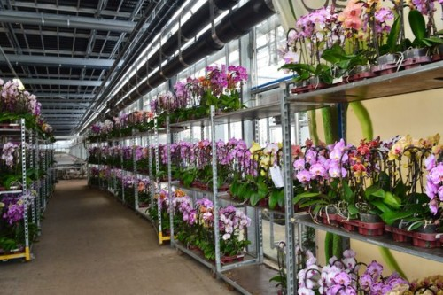 Giới thiệu về nhà kính trồng lan
