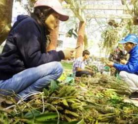 """Nhộn nhịp """"chợ"""" lan rừng lớn nhất Huế"""
