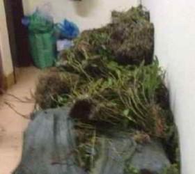 Bị bắt giữ vì vận chuyển 180 kg cây hoa Phong Lan