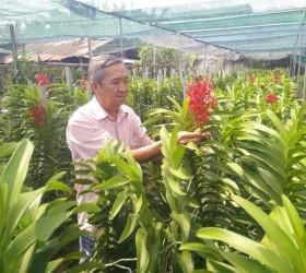 Hoa phong lan trên đất thép Củ Chi
