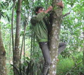 Nguy hiểm nghề hái lan rừng