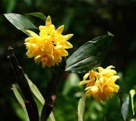 Sắc màu hoa lan