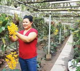 Nữ nông dân thăng hoa với lan rừng