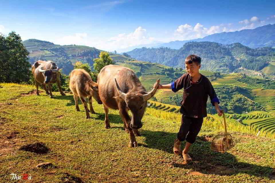 Những tác phẩm đặc sắc trong triển lãm Việt Nam quê hương tôi