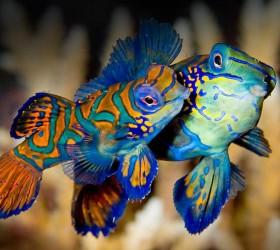 Chiêm ngưỡng 10 loài cá đẹp sặc sỡ nhất thế giới