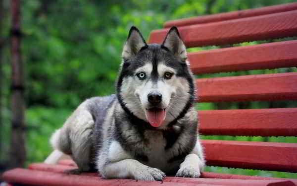 10 giống chó đẹp nhất