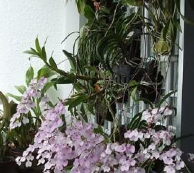 Ngắm những ban công đầy hoa phong lan cực đẹp