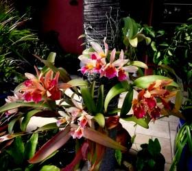 Orchid on treee 3